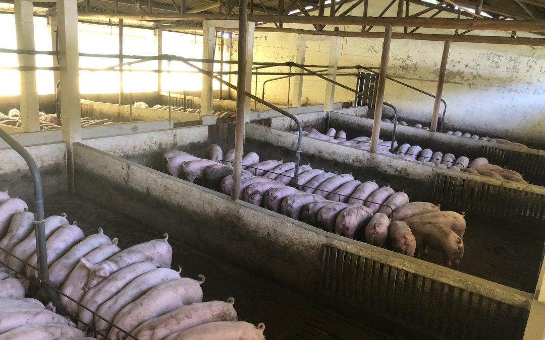 De veehouderij en menselijke gezondheid